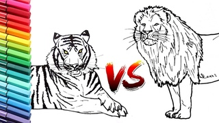 How to Draw Lion Vs Tiger Wild Animals Color pages for Kids - Learning Animals Names Colors