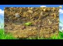 Сборник - Как говорят животные _ Насекомые _ Овощи _ Развивающие мультики для де