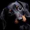 Собачки | Собаки