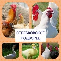 Фото Ирины Волковой
