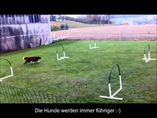 Hoopers Nadac Hoopers Agility Hundeschule gooddog Freudwil bei Uster