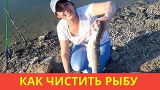 Как чистить рыбу на рыбалке? Чистка рыбы. Поймали пеленгаса
