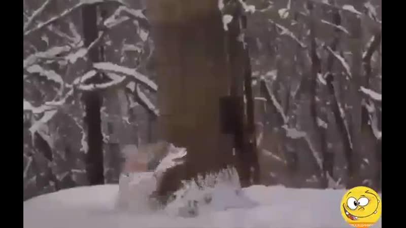 Взял пса на охоту Домой еле живой от смеха вернулся