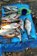 Молодо - зелено )) пожелаем ему удачи!  Фото: Рыбачок (начинающий)  #нежный_ветер #рыбалка #улов #ры