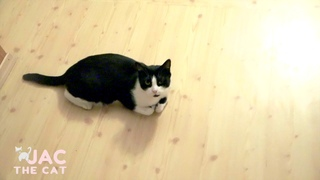 Little Cat is Cute. Jac the Cat channel
