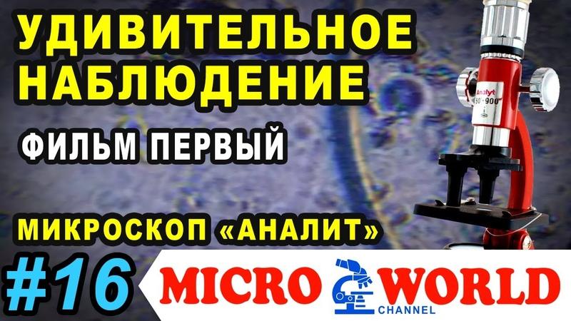 Микробы под микроскопом Аналит Удивительное наблюдение Фильм первый MICRO WORLD 16