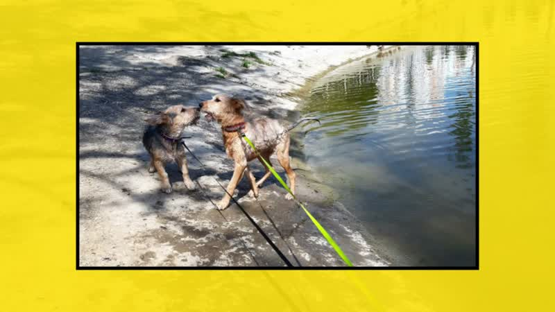 503093830 Собаки и Зареченское море