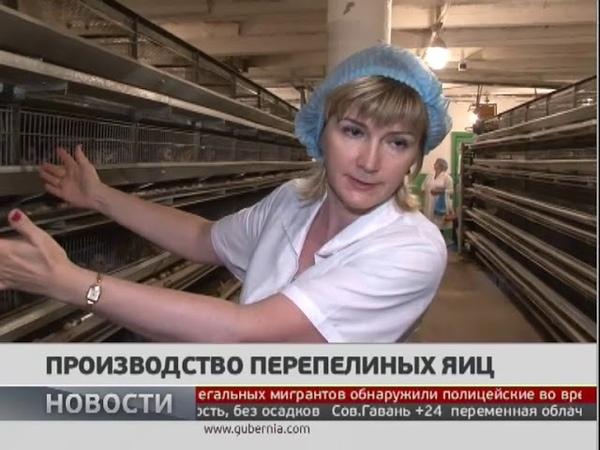 Производство перепелиных яиц Новости 16 07 2019 GuberniaTV