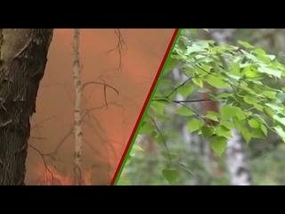 Пропоганда лесных пожаров 1